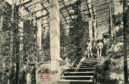 AK Limone Sul Garda 1900 Plantazione Del Limoni - Lago Di Garda - Brescia