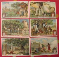 6 Chromo Liebig : Plantes Sacrées. 1911. S 1028. Chromos. - Liebig