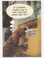 Chien La Poste  RECTO/VERSO - B80 - Perros