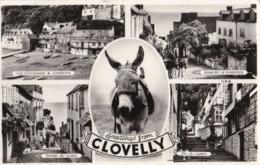 AP06 Clovelly Multiview - RPPC, Donkeys - Clovelly