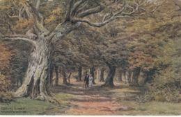 Postcard - Art - A.R.Quinton - Queens Bower No Card No.. Unused Very Good - Postcards