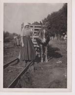 PEAT WORKERS ASCOTT NEAR BRIDGWATER PEAT DIGGING FIELD RAILWAY HORSE   +- 21*16CMFonds Victor FORBIN (1864-1947) - Professions