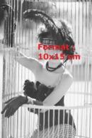 Reproduction D'une Photographie Ancienne D'une Danseuse Coiffée De Plumes, Corset, Gants, Bas Résilles Dans Une Cage - Riproduzioni