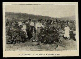 1921 --  BULGARIE  LA CUEILLETTE DES ROSES A RAHMANLARI  3R725 - Zonder Classificatie