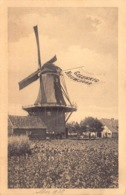 Windmolens Windmill Moulin Molen  Gelukkig Nieuwjaar   Barry 1110 - Moulins à Vent