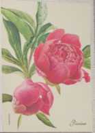 Petit Calendrier De Poche 2005 Illustration Fleur Pivoine - Maromme - Calendars