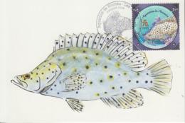 Carte  Maximum  1er  Jour    NOUVELLE  CALEDONIE    Aquarium  De  NOUMEA     Loche  Truite   2003 - Poissons