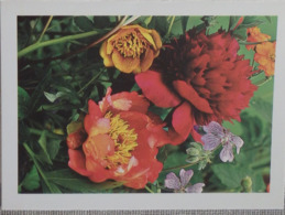 Petit Calendrier De Poche 2005 Fleur  Pivoine Pharmacie Meung Sur Loire - Kleinformat : 2001-...