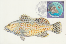 Carte  Maximum  1er  Jour    NOUVELLE  CALEDONIE    Aquarium  De  NOUMEA     Grisette   2003 - Poissons