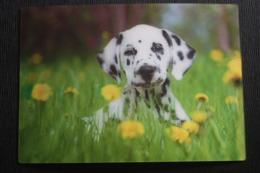 Dalmatian - Color 3D Postcard - Stereo / PUPPY DOG - German Postcard - Stereoscopische Kaarten