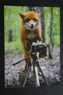 Funny Fox With Camera - Photographer  - Modern Postcard -  Russian Edition - Tierwelt & Fauna
