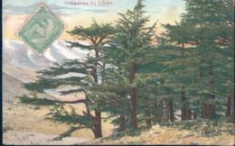 POSTAL LIBANO - CEDRES DU LIBAN - Líbano