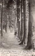 CPA   88   SAINT-DIE---GRATTIN---1903 - Saint Die