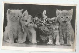 5 Small Kittens F942-268 - Fotos