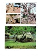 Grande Cpm - Lot 2 - Guépard CHEETAH - Zèbre Zebras - African Wildlife - Cebras