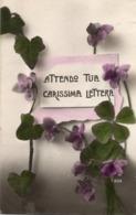 """CT-03063- """" ATTENDO TUA CARISSIMA LETTERA """" VIOLA DEL PENSIERO  VIAGGIATA 1910 - Fiori"""