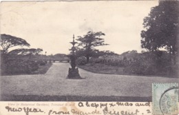 286/ View In Botanical Gardens, Trinidad 1906 - Trinidad