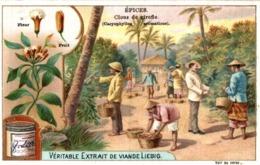Chromo Liebig - Epices - Clous De Girofle (Caryophyllus Aromaticus) - Liebig