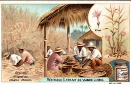 Liebig Chromo Theme Les épices : Gingembre Fleur Bambou A78 - Liebig