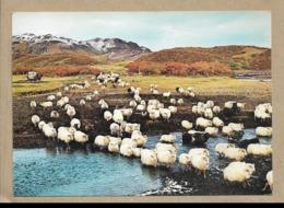 Islanda - Viaggiata - Islanda