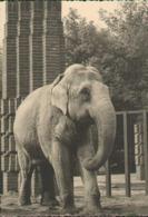 Leipzig, Zoologischer Garten, Elefant, Foto-Postkarte, Sachsen - Leipzig