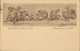 Leipzig, Zoologischer Garten, Rhesusaffen Bei Der Arbeit, Foto-Postkarte, Sachsen - Leipzig