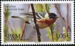 SAINT PIERRE AND MIQUELON SPM 2019 Bay-breasted Warbler Bird Birds Animals Fauna MNH - Birds