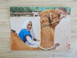 CPA.- Monastir - Halte Du Chamelier - Tunisie