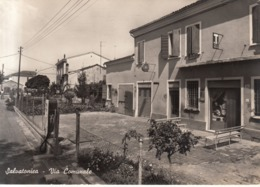 629 - Salvatonica - Italie