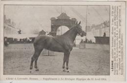 Léonie, Née Et élevée à PLOUENAN Chez J. Autret, Appartient à Joseph Boucher...à LANDERNEAU - Bretagne Hippique 11/04/14 - Landerneau