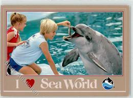52282780 - Delphin Kind Fuetterung - Sea World - Fische Und Schaltiere