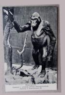 Musée рostcard Gorilla саrte рostаle Hamburg - Germania