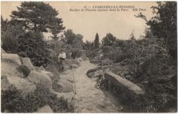 CPA 91 - VERRIERES LE BUISSON (Essonne) - 47. Rocher De Plantes Alpines Dans Le Parc (petite Animation) - ND Phot - Verrieres Le Buisson