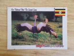 CPA - Image Of Uganda , Our National Bird : The Crested Crane - Oeganda