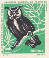 PORTUGAL MATCHBOX LABEL - VIGNETTE - CINDERELA - BIRDS - BIRD - OWL - - Zündholzschachteletiketten