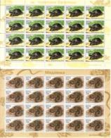 Belarus 2003 .Reptiles: Snake, Turtle. 2 M/S Of 20.   Michel # 481-82 Bg. - Bielorussia