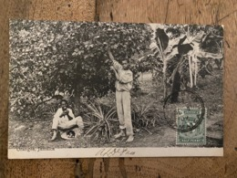 JAMAIQUE : Recolte Des Oranges .................... OD-4539 - Jamaica