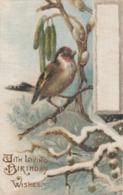 100% Silk ; Bird Birthday Postcard , 00-10s ; John Winsch - Fantasia