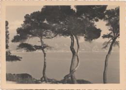 G28- PHOTO - EDITEUR MANIEZZI , NICE - L'EPREUVE D'ART - MENTON VU DU CAP MARTIN  - (2 SCANS) - Places
