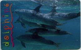 South Africa MTN R15 Dolphins - Afrique Du Sud