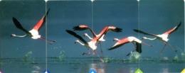 South Africa MTN R15 Set Flamingos - Afrique Du Sud