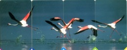 South Africa MTN R15 Set Flamingos - Südafrika