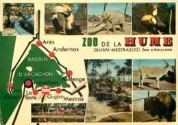 33 - GUJAN MESTRAS - ZOO DE HUME - Gujan-Mestras