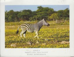Namibia - Animal - Zebra - Nice Stamp - Namibië
