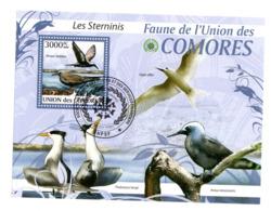 Sternes Bloc De L'Union Des Comores - Gaviotas