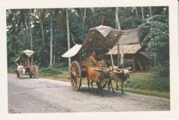 Postcard - Bullock Carts Malacca Card No..18 Unused Very Good - Postkaarten