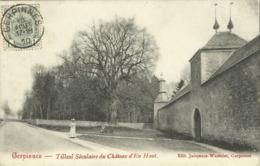 Gerpinnes - Tilleul Séculaire Du Château D'En Haut - Gerpinnes