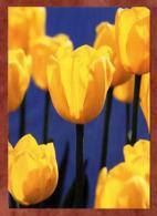 Tulpen (82251) - Blumen
