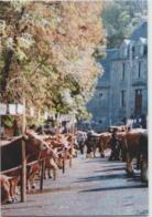 CPM 48 NASBINALS ... Foire Concours Race Aubrac (Livenais) Vaches - Francia
