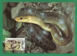 Moldova / Moldawien  1993 , Aesculapian Snake - WWF Official Maximum Card - Posta Moldova 06.06.1993 - Moldova